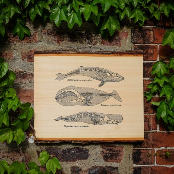 Anatomy of the Whale | Screenprinted Wood Slab