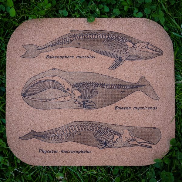 Anatomy of the Whale | Screenprinted Cork Board