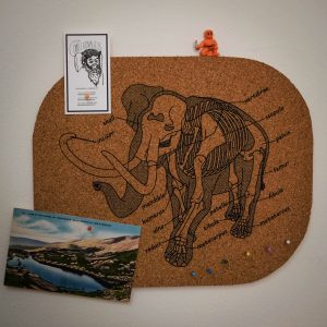 Anatomy of the Elephant | Screenprinted Cork Board