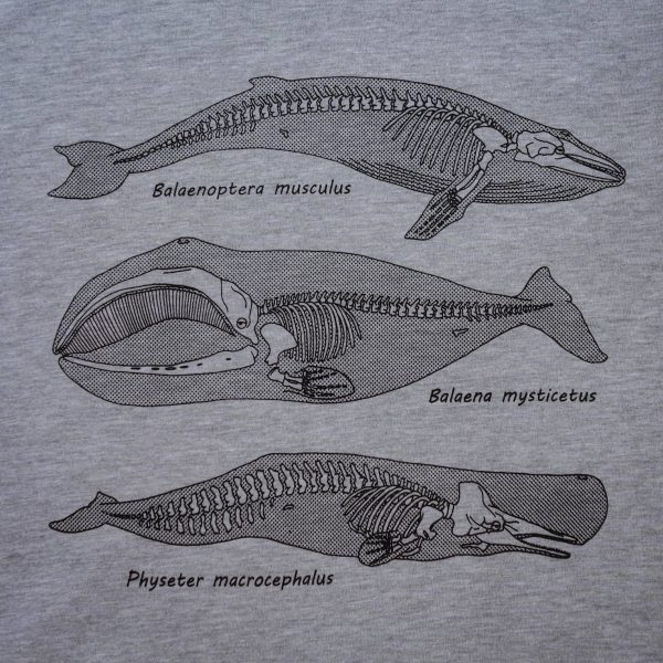 Anatomy of the Whale | T-Shirt